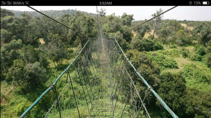 Ngare Ndare Forest 1